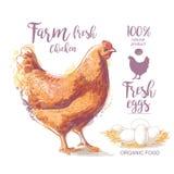 Иллюстрация вектора цыпленка иллюстрация штока