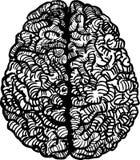 Иллюстрация вектора человеческого мозга Стоковое Изображение
