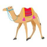 Иллюстрация вектора шаржа верблюда на белизне Стоковое Изображение