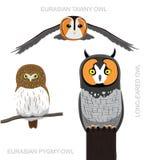 Иллюстрация вектора шаржа сыча Европы птицы установленная иллюстрация вектора