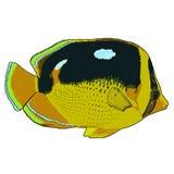 Иллюстрация вектора Butterflyfish Fourspot Стоковые Фото