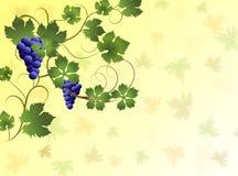 Иллюстрация виноградин на желтой предпосылке Стоковые Фотографии RF