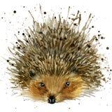 Иллюстрация ежа с предпосылкой выплеска текстурированной акварелью Стоковая Фотография RF