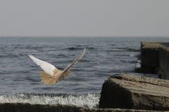 иллюстрация летания пасхи dove стоковое изображение
