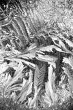 иллюстрация делает по образцу зиму окна вектора Стоковая Фотография RF