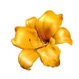 Иллюстрация желтой лилии Стоковые Изображения RF