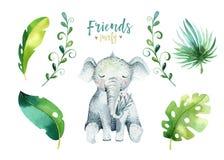 Иллюстрация животных младенца изолированная питомником для детей Чертеж boho акварели тропический, черепаха ребенка милая тропова Стоковая Фотография RF