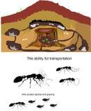 Иллюстрация жизни муравьев изолированная на белизне Стоковая Фотография RF