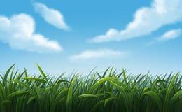 Иллюстрация зеленых лугов Стоковые Изображения