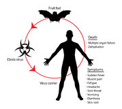 Иллюстрация знания образования диаграммы основ Ebola Стоковое Изображение