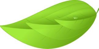 Иллюстрация листьев зеленого цвета 3 значка Eco естественная стоковые изображения