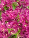 Иллюстрация картины бугинвилии Стоковое фото RF