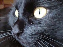 Иллюстрация кота с большими желтыми глазами черный цвет бесплатная иллюстрация