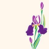 Иллюстрация красивого †радужек « Стоковое Изображение RF
