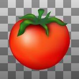 Иллюстрация красного зрелого томата иллюстрация штока