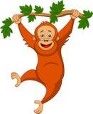 Милый шарж орангутана вися на ветви дерева иллюстрация штока