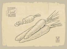 Иллюстрация моркови Стоковое Изображение