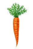 Иллюстрация моркови Стоковое Фото