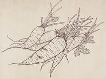 Иллюстрация нарисованная рукой моркови Стоковое Изображение RF