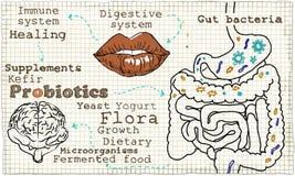 Иллюстрация о Probiotics и пищеварительной системе Стоковые Изображения