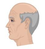 Иллюстрация пожилого человека Стоковые Фотографии RF