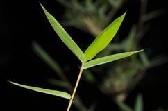 иллюстрация предпосылки bamboo выходит вектор Стоковое Фото