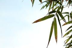 иллюстрация предпосылки bamboo выходит вектор Стоковые Фото