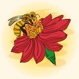 Иллюстрация пчелы на цветке, опыление, рук-чертеж Стоковое Изображение