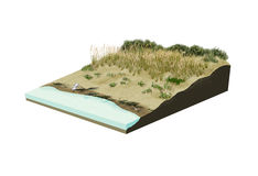 Иллюстрация пляжа цифровая Стоковые Фото