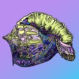 Иллюстрация раковины морским запятнанная zendala Стоковая Фотография