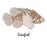 Иллюстрация рыб аквариума соленой воды крылатка-зебры Стоковые Изображения RF