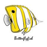 Иллюстрация рыб аквариума соленой воды Butterflylfish Стоковые Фото