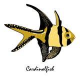 Иллюстрация рыб аквариума соленой воды Cardinalfish Стоковое Изображение RF