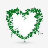 Иллюстрация сердца ветви плюща вектора Стоковое Изображение RF