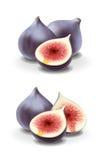 Иллюстрация смокв Стоковые Изображения