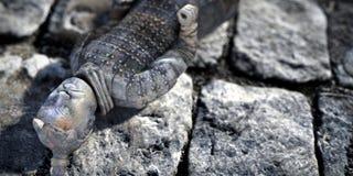 Иллюстрация солдата олова 3d Стоковое Фото