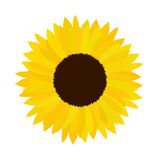 Иллюстрация солнцецвета doodle вектора Стоковые Фото
