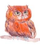 Иллюстрация сычей в методе акварели Стоковая Фотография RF