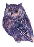 Иллюстрация сычей в методе акварели Стоковое Изображение