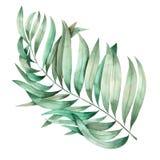 Иллюстрация с изолированной ветвью листьев ладони покрашенной в акварели на белой предпосылке Стоковые Изображения RF