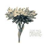 Иллюстрация с цветком весны Стоковое Фото