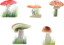 Грибы цвета в траве на белизне Стоковое фото RF