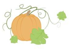 Иллюстрация тыквы на белой предпосылке Стоковая Фотография RF