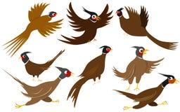 Иллюстрация фазана Стоковые Фотографии RF