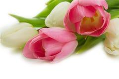 иллюстрация цвета букета имитирует воду вектора тюльпанов Стоковые Фото