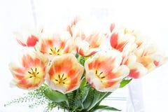 иллюстрация цвета букета имитирует воду вектора тюльпанов Стоковая Фотография RF