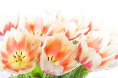 иллюстрация цвета букета имитирует воду вектора тюльпанов стоковое фото