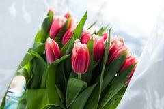 иллюстрация цвета букета имитирует воду вектора тюльпанов Стоковые Изображения RF