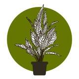 Иллюстрация цветка в баке Стоковое Изображение RF