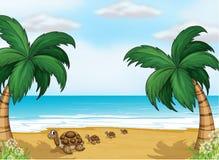 Черепахи на seashore иллюстрация штока